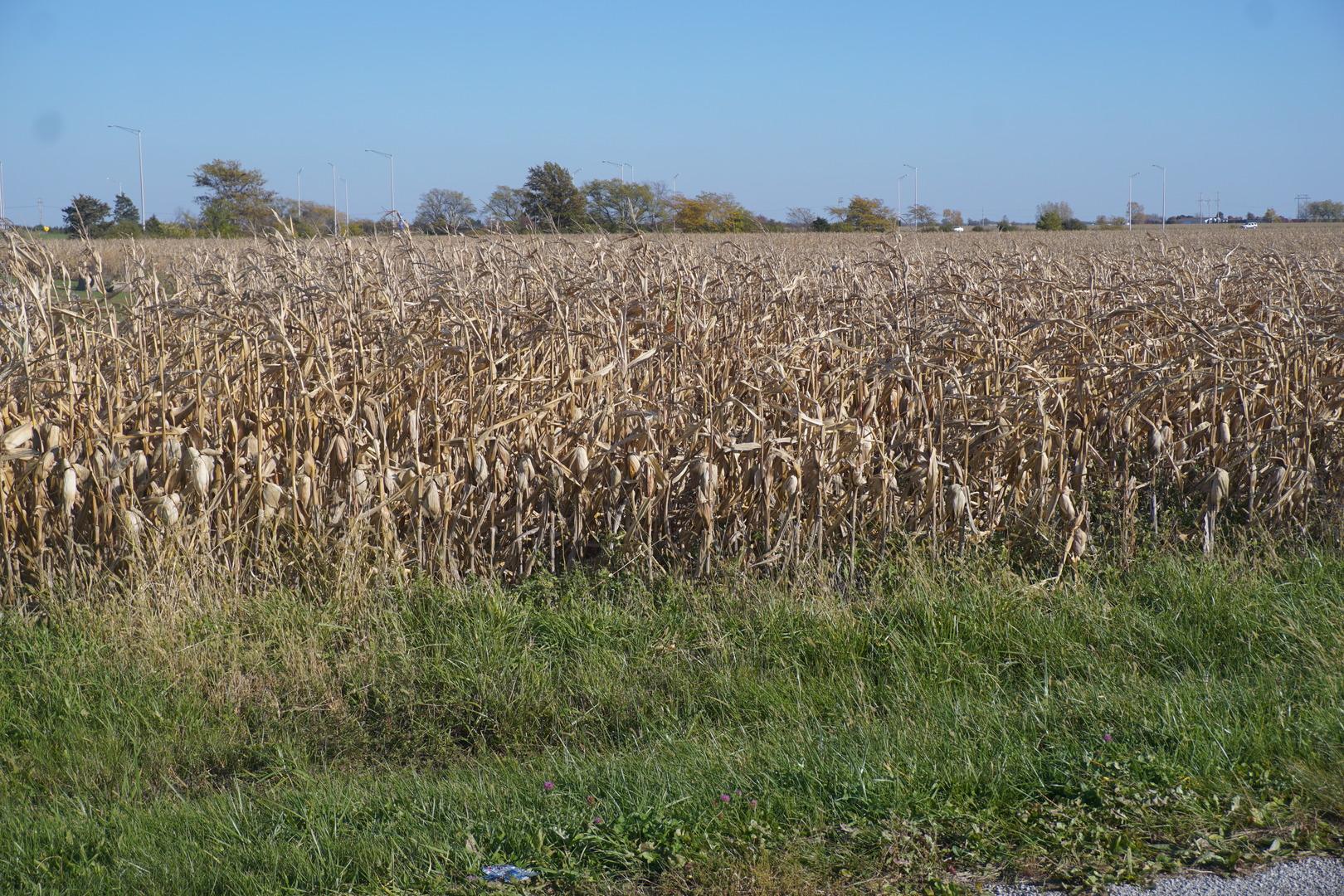 Sec 7 Twp 26N R 10E, Gilman, Illinois 60911, ,Farm,For Sale,Twp 26N R 10E,MRD10563078