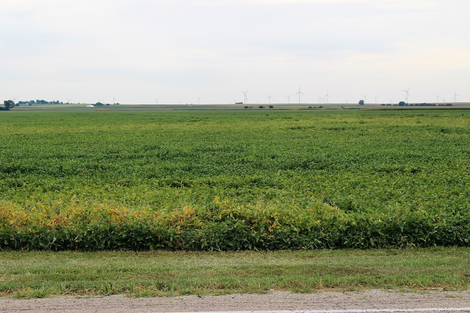 3190 State Highway 54, Kenney, Illinois 61749, ,Farm,For Sale,State Highway 54,MRD11209893